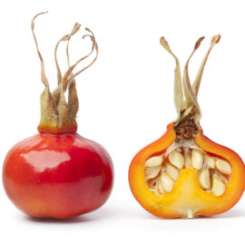 Why rosehip oil for hair provides powerful protection