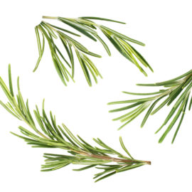Why organic roman beauty rosemary is the ultimate eco-beauty active