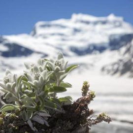 Look to pure alpine air for inspiration for anti-pollution skincare